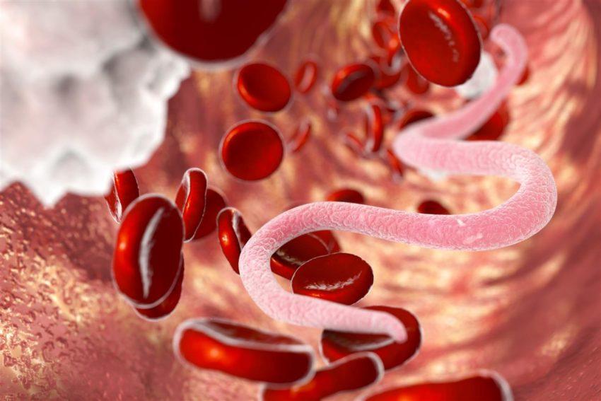 paraziti v krvi
